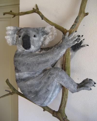 Koala 3.jpg